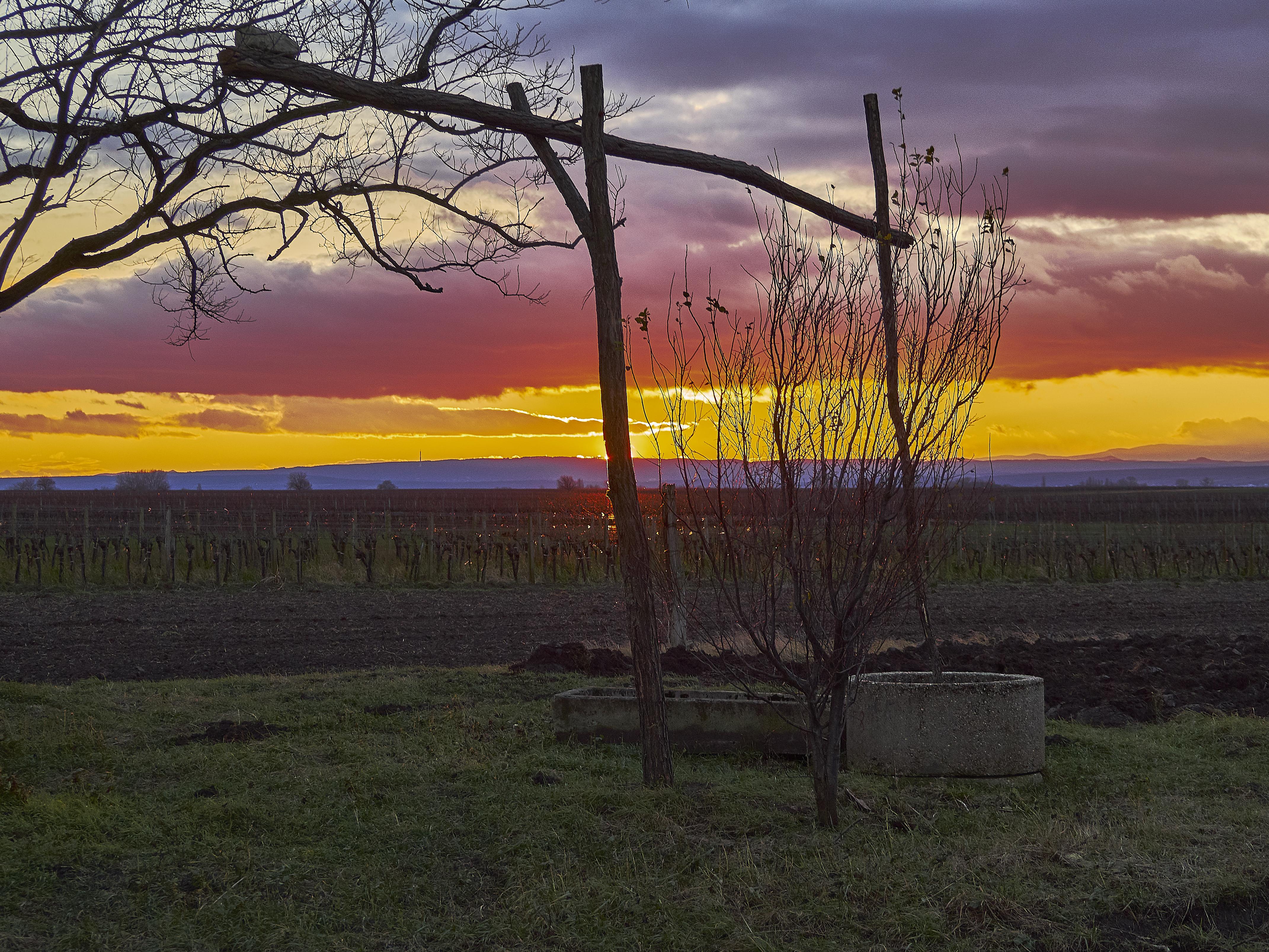 Am Abend an der Ungarischen Grenze